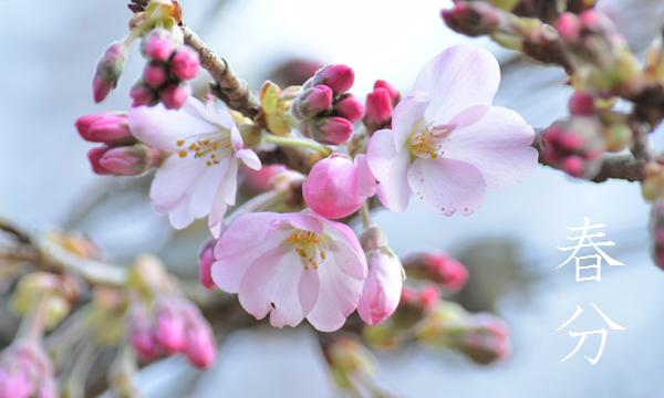 二十四節気「春分 (しゅんぶん)」 3/20~4/3頃